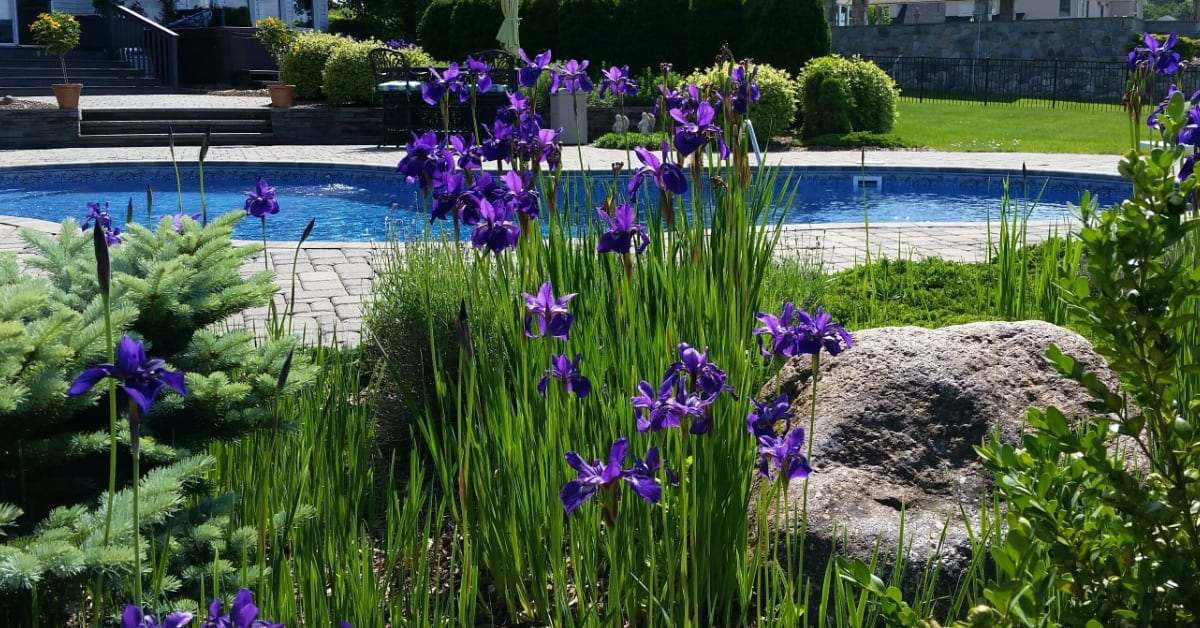 5 Incredible Pool Landscape Designs For Your Home In Austin Tx Ies Pools